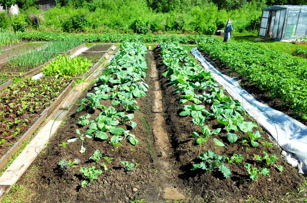 как украсить грядки в огороде