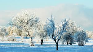 Весенняя защита фруктовых деревьев от